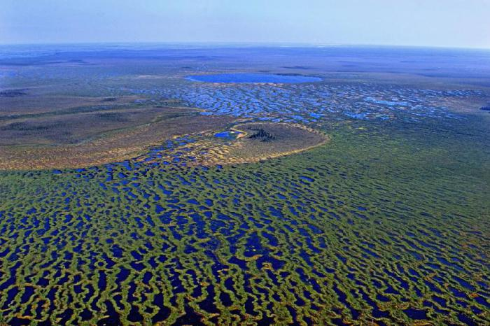 Russia. Russian Great Vasyugan swamp