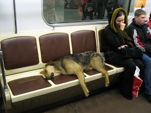 Fun Facts about Moscow Metro, Subway Dogs