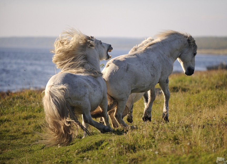 Russian nature and horses