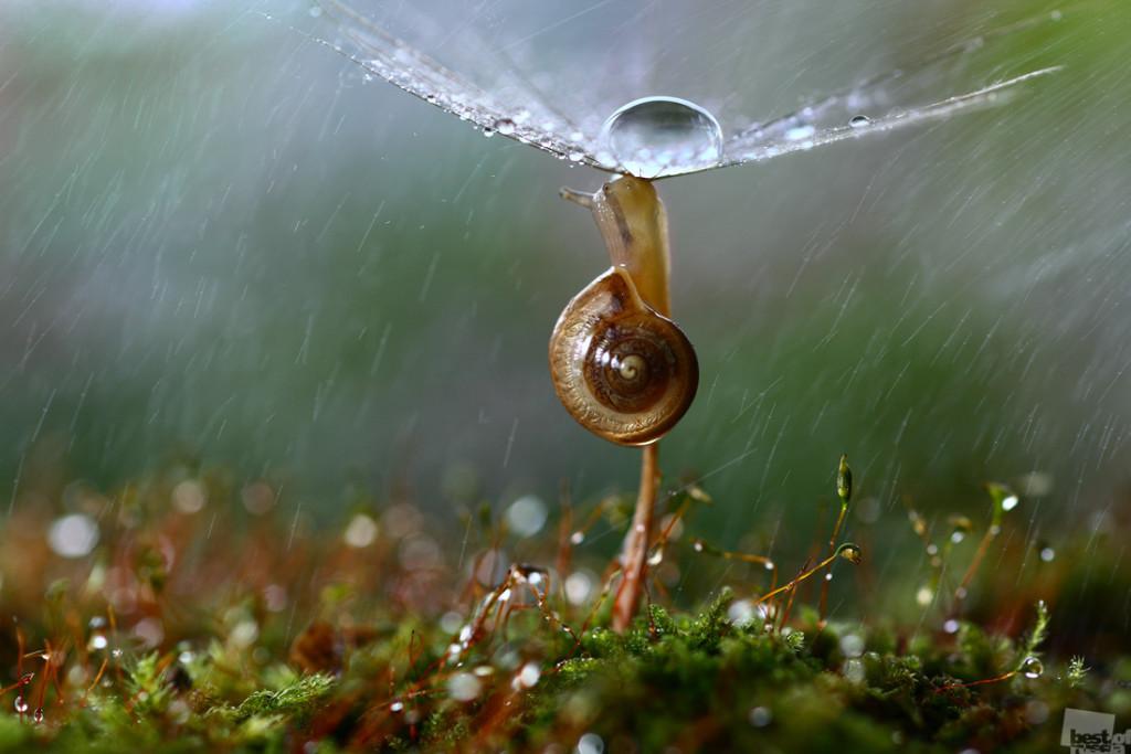 Russian nature, rain