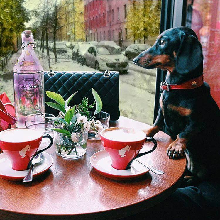 french cafes in St PEtersburg