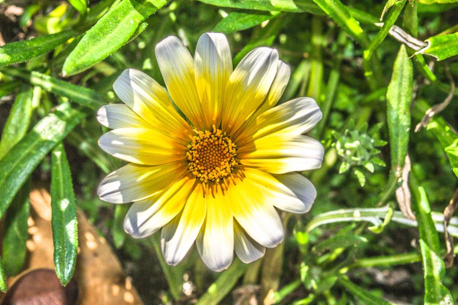 Alina-Los-Angeles-Santa-Barbara-california-flower
